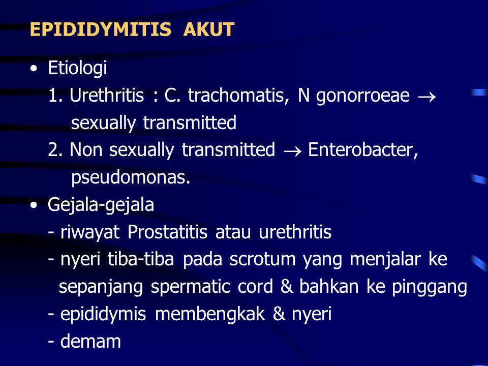 - scrotum bengkak, merah - spermatic cord menebal Laboratorium - Lekositosis - Mid stream urin - direct smear  Gram - kultur Diagnosa banding - Torsio testis - Tumor testis - Tubercolous epididymitis  beading - Mumps orchitis