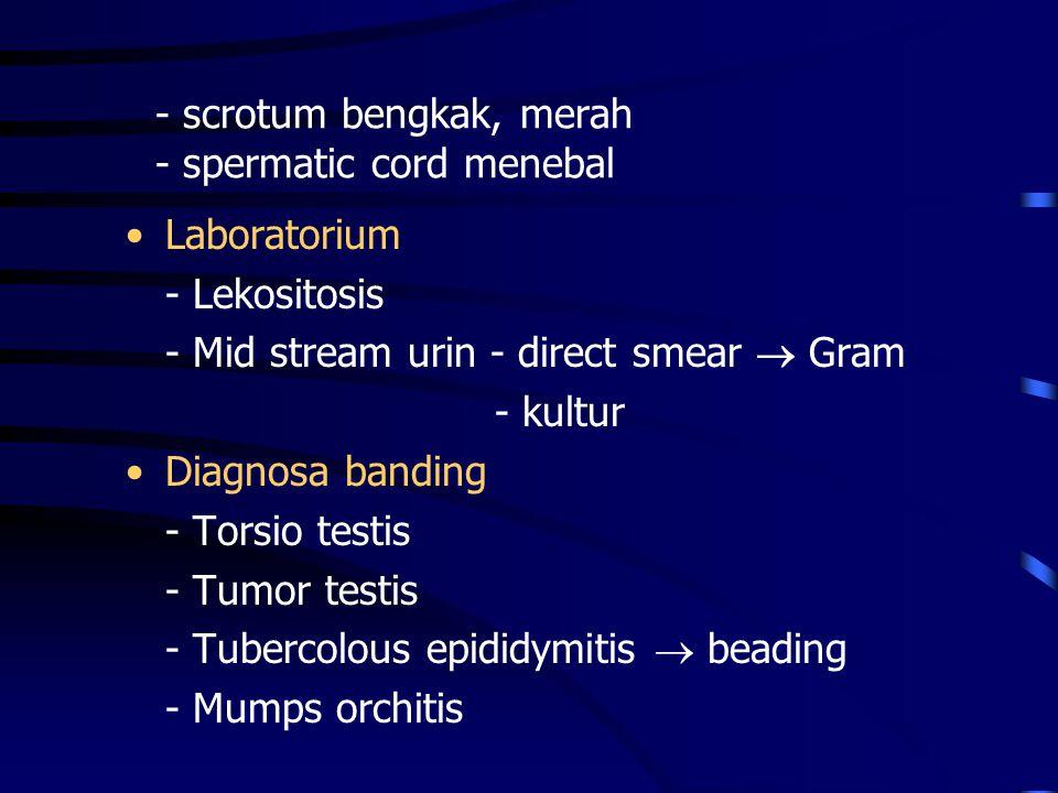 - scrotum bengkak, merah - spermatic cord menebal Laboratorium - Lekositosis - Mid stream urin - direct smear  Gram - kultur Diagnosa banding - Torsi