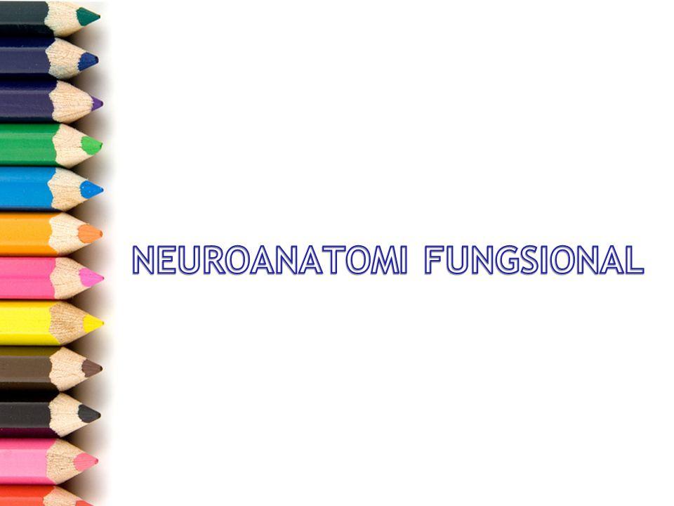 SSP –Intracranial –Ekstracranial SST –Nervi craniales –Nervi spinales Sistem saraf otonom –Simpatis –Parasimpatis Lesi sistem saraf pusat –UMN –LMN