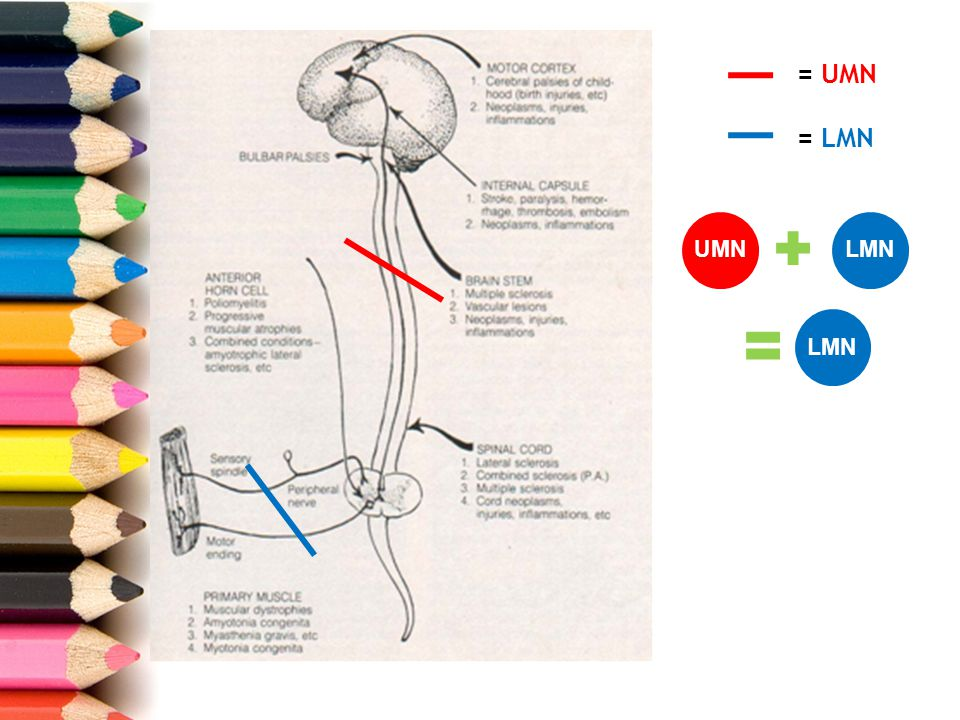 b.Pemeriksaan fisik Vital Sign Pemeriksaan neurologis: 1.Pemeriksaan motorik 2.Pemeriksaan sensorik 3.Pemeriksaan visceromotorik 4.Skala UGO-FISCH DIAGNOSIS