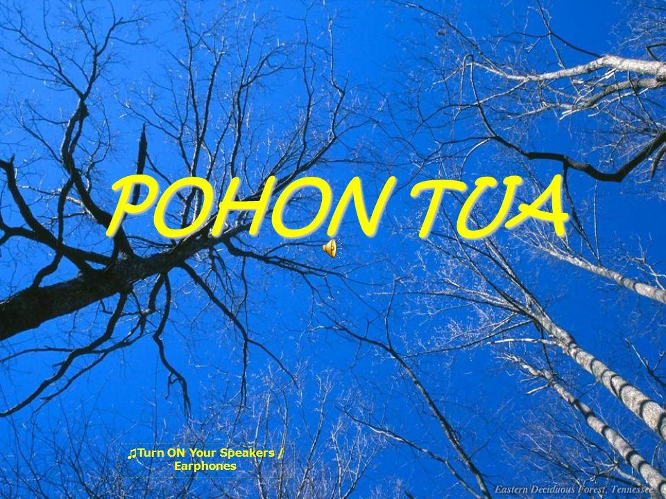 POHON TUA ♫T♫T urn ON Your Speakers / Earphones