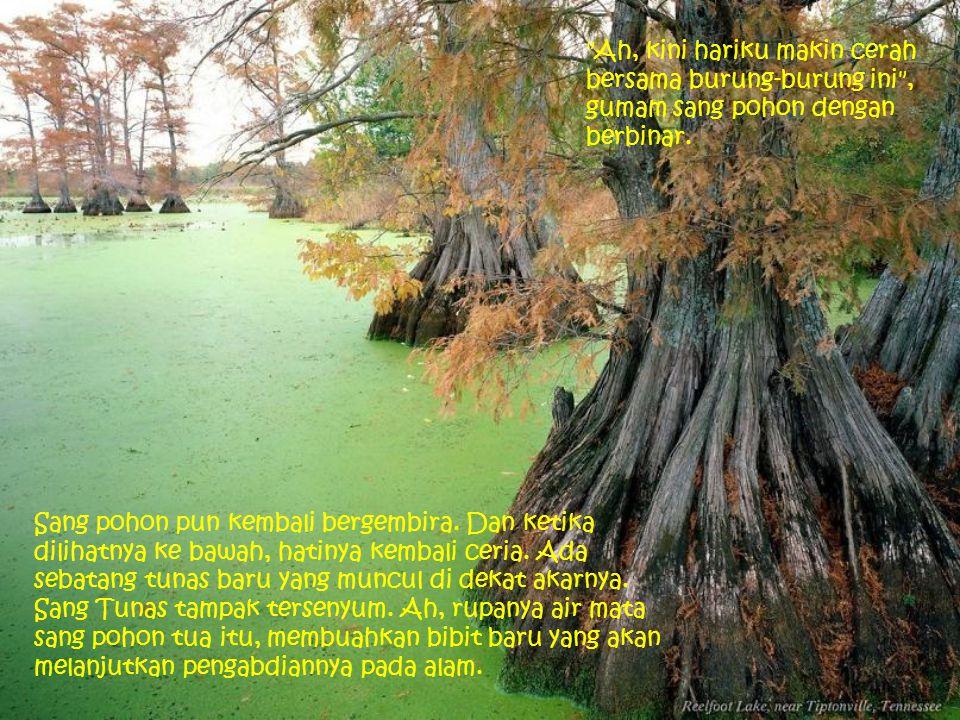 Sang pohon pun kembali bergembira.Dan ketika dilihatnya ke bawah, hatinya kembali ceria.