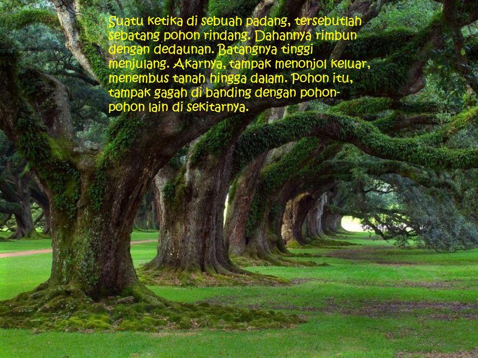 Suatu ketika di sebuah padang, tersebutlah sebatang pohon rindang. Dahannya rimbun dengan dedaunan. Batangnya tinggi menjulang. Akarnya, tampak menonj