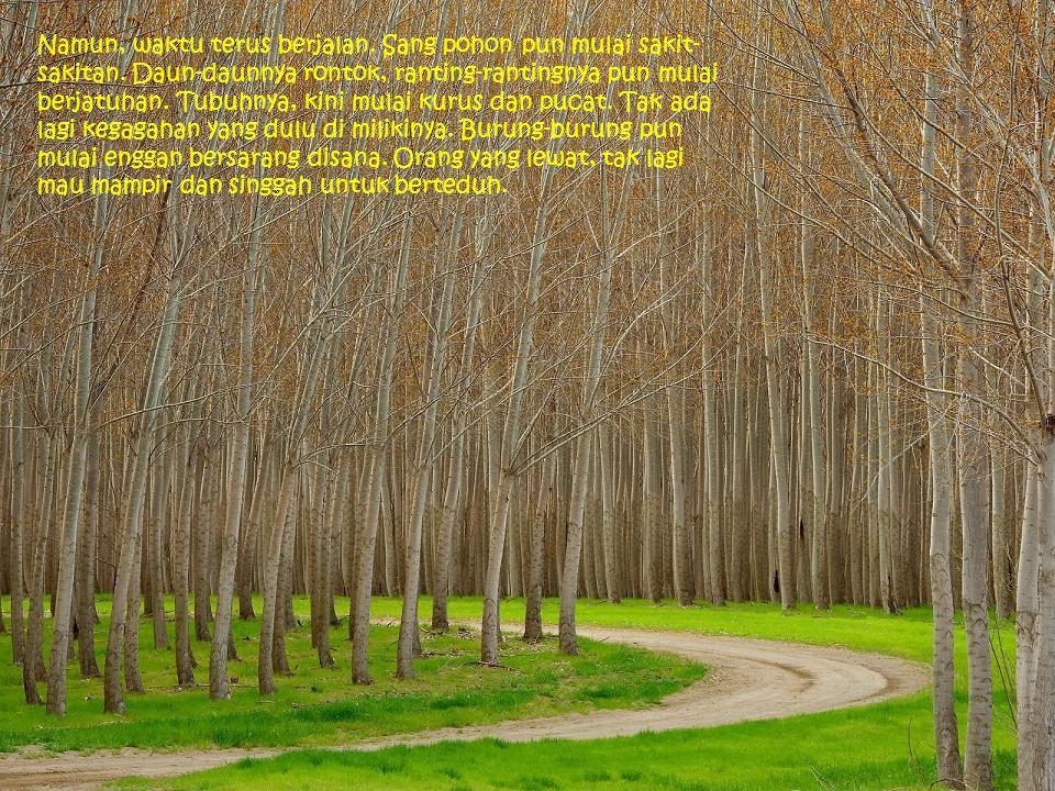 Namun, waktu terus berjalan. Sang pohon pun mulai sakit- sakitan. Daun-daunnya rontok, ranting-rantingnya pun mulai berjatuhan. Tubuhnya, kini mulai k