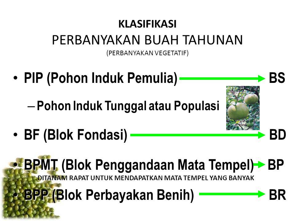 KLASIFIKASI PERBANYAKAN BUAH TAHUNAN (PERBANYAKAN VEGETATIF) PIP (Pohon Induk Pemulia) BS PIP (Pohon Induk Pemulia) BS – Pohon Induk Tunggal atau Popu