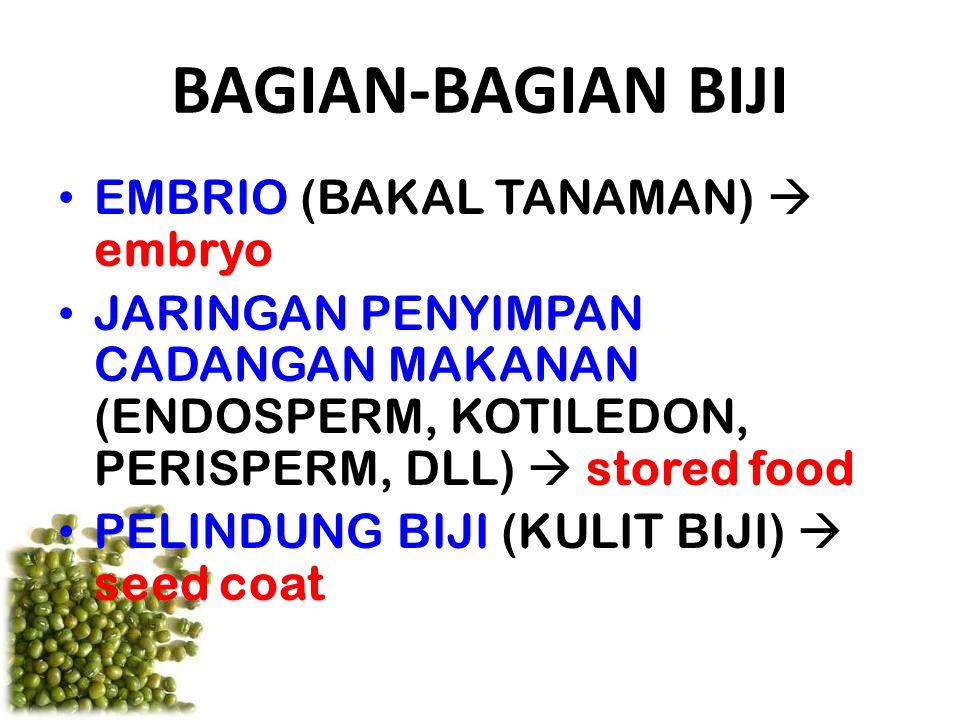 BAGIAN-BAGIAN BIJI EMBRIO (BAKAL TANAMAN)  embryo JARINGAN PENYIMPAN CADANGAN MAKANAN (ENDOSPERM, KOTILEDON, PERISPERM, DLL)  stored food PELINDUNG