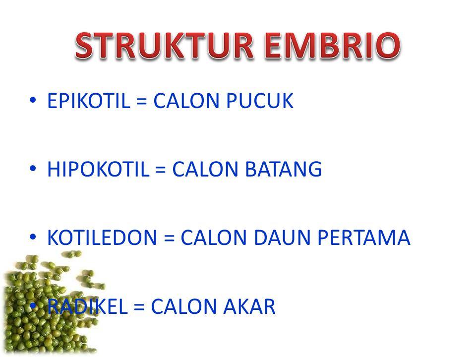EPIKOTIL = CALON PUCUK HIPOKOTIL = CALON BATANG KOTILEDON = CALON DAUN PERTAMA RADIKEL = CALON AKAR