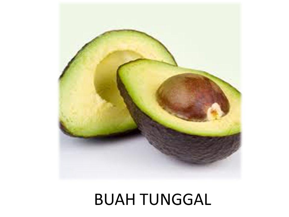 BUAH TUNGGAL