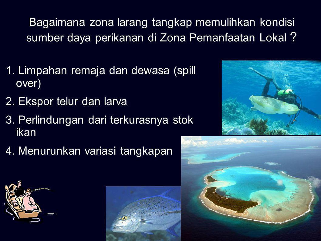 Perkembangbiakan ikan (bertelur, beranak, dan pembesaran) di Zona Larang Tangkap berlangsung dengan baik Penghentian penangkapan ikan di Zona Larang Tangkap (Zona Perlindungan Bahari dan Zona Pariwisata)
