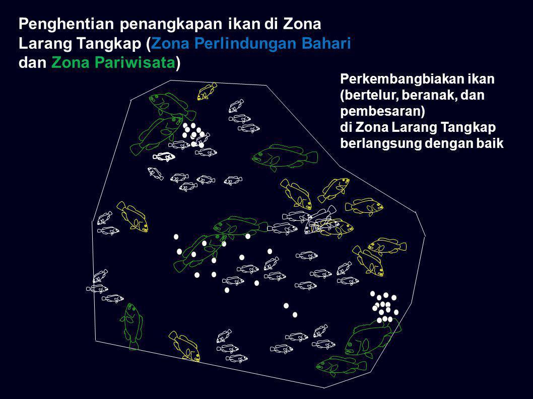 Perkembangbiakan ikan (bertelur, beranak, dan pembesaran) di Zona Larang Tangkap berlangsung dengan baik Penghentian penangkapan ikan di Zona Larang T