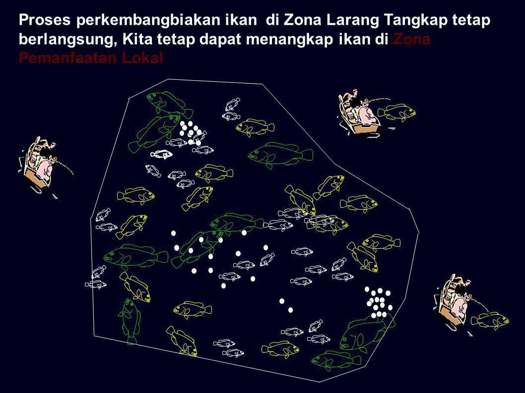 Jika Zona Larang Tangkap terjaga dari aktifitas penangkapan ikan, Maka Ikan di Zona Pemanfaatan Lokal semakin banyak dan selalu ada pada saat kita tangkap