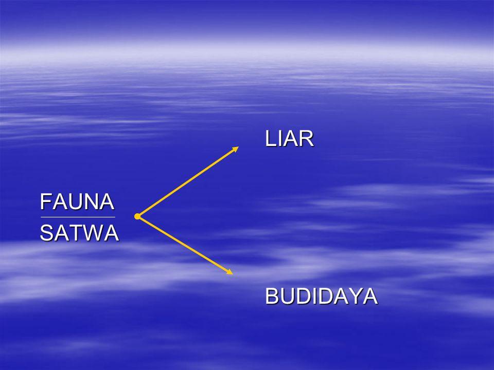 LIAR LIAR FAUNA FAUNA SATWA SATWA BUDIDAYA BUDIDAYA