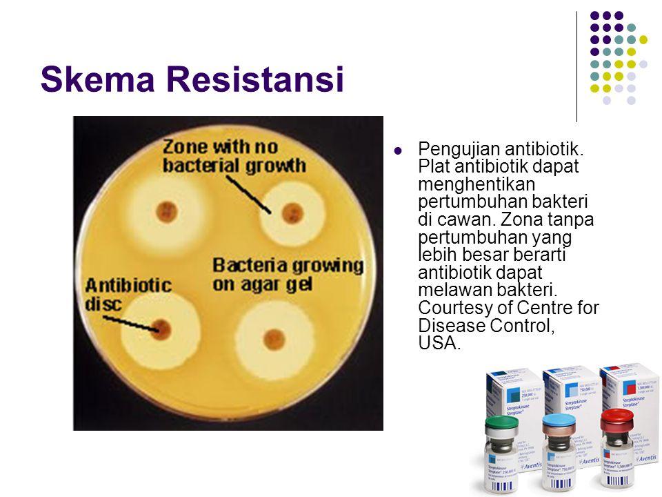 Skema Resistansi Pengujian antibiotik.