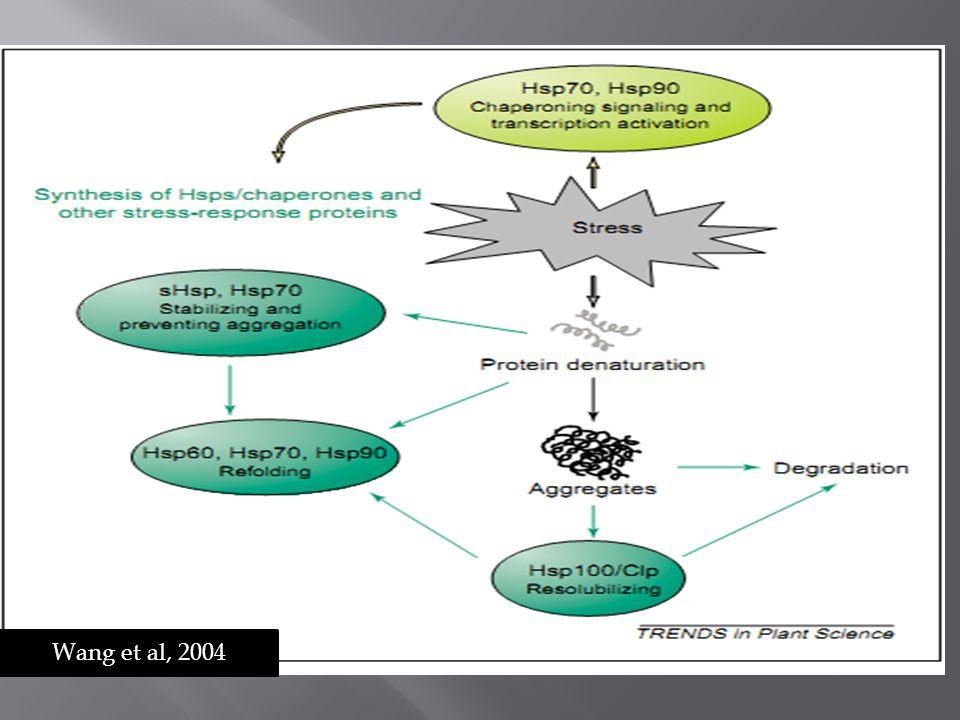 Wang et al, 2004