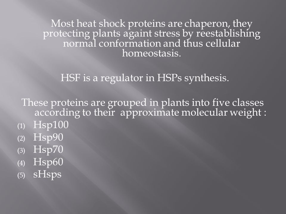 Most heat shock proteins are chaperon, they protecting plants againt stress by reestablishing normal conformation and thus cellular homeostasis.