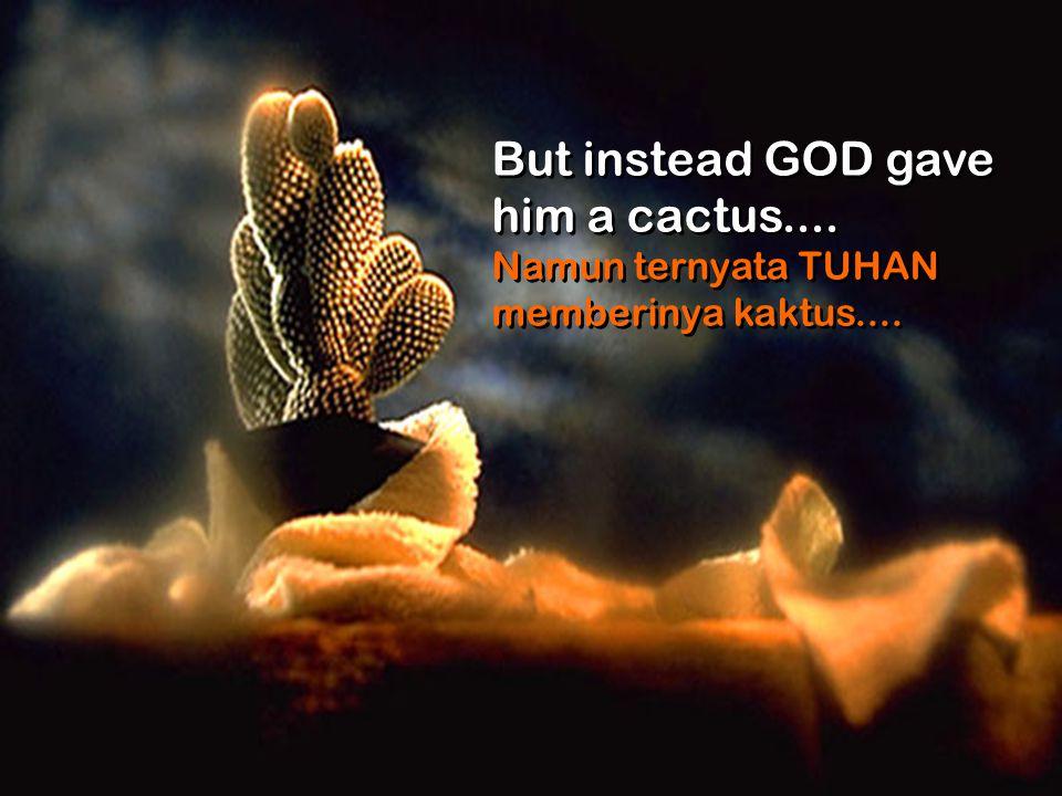 But instead GOD gave him a cactus....Namun ternyata TUHAN memberinya kaktus....