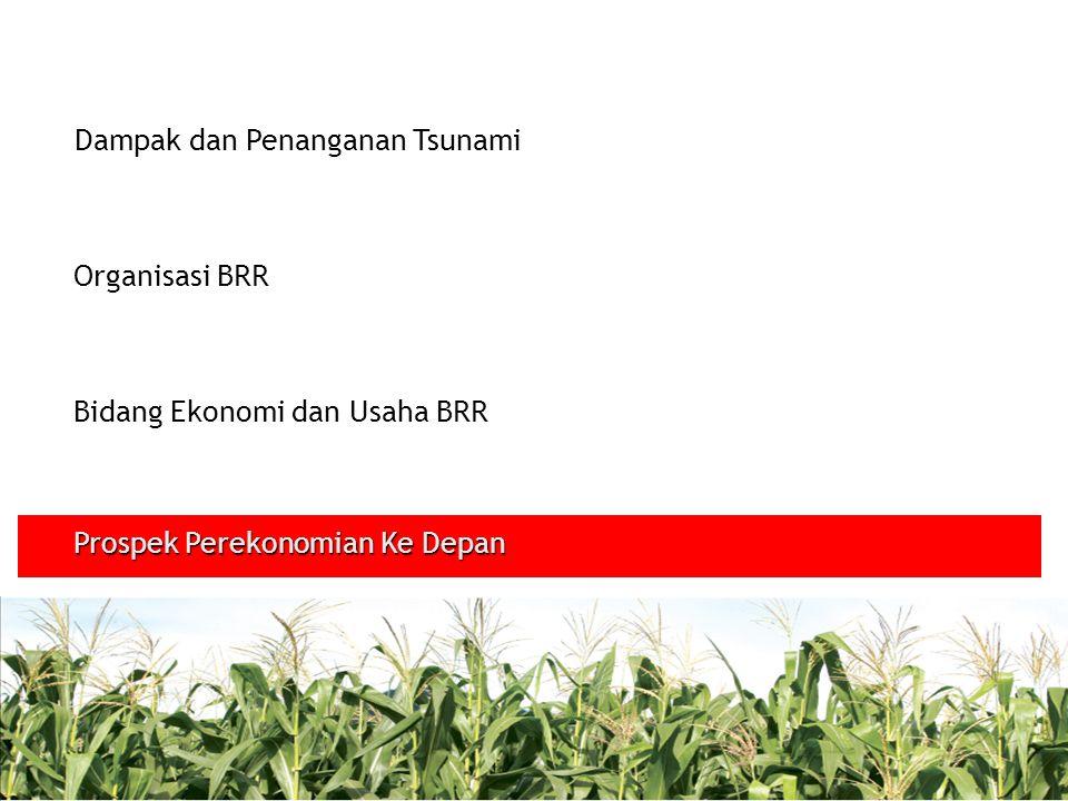 Dampak dan Penanganan Tsunami Organisasi BRR Bidang Ekonomi dan Usaha BRR Prospek Perekonomian Ke Depan