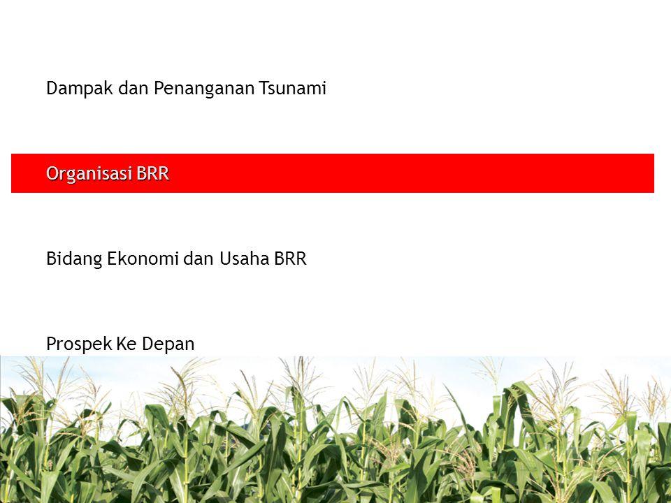 -Dengan asumsi PDB Non Migas terkoreksi 40%, maka pendapatan per kapita tahun 2005 menurun sebesar 32% -Proyeksi penurunan perekonomian sebesar 5 % di Aceh; 20 % di Nias -Kredit bermasalah mencapai Rp 2 triliun dari total kredit yang disalurkan perbankan sebesar Rp 3,9 triliun -Dari total 2.254.155 orang angkatan kerja; 25 % (600-800 ribu orang) kehilangan pekerjaan di sektor pertanian, perikanan, dan UKM -92 ribu industri kecil di NAD dan 12.500 di Nias dengan total asset sebesar Rp 3,1 triliun rusak -Kredit bermasalah mencapai Rp 2 triliun dari total kredit yang disalurkan perbankan sebesar Rp 3,9 triliun.