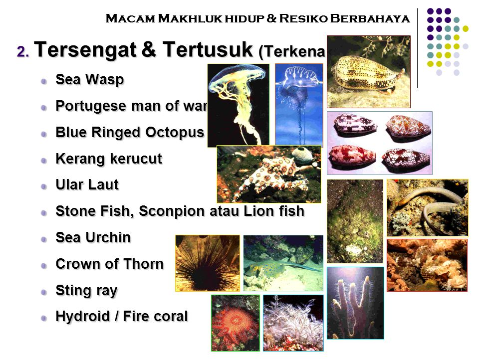 Macam Makhluk hidup & Resiko Berbahaya  T ersengat & Tertusuk (Terkena bisa) Sea Wasp Portugese man of war Blue Ringed Octopus Kerang kerucut Ular L