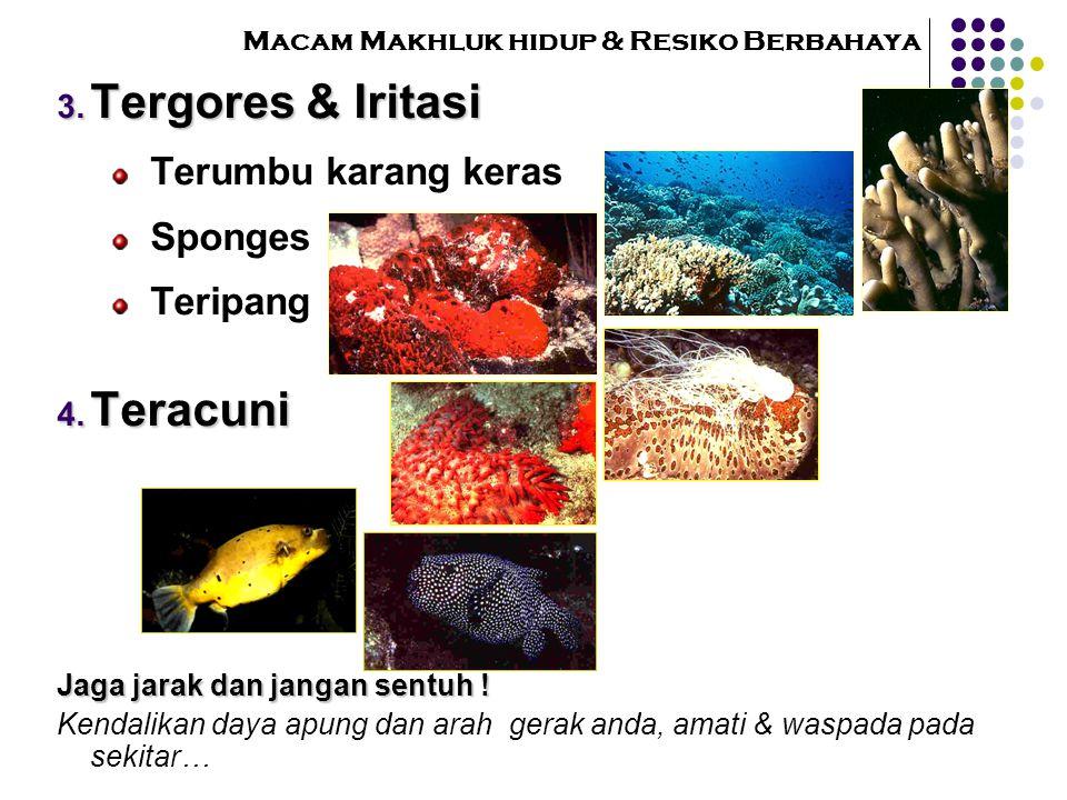 Macam Makhluk hidup & Resiko Berbahaya  T ergores & Iritasi Terumbu karang keras Sponges Teripang  T eracuni Jaga jarak dan jangan sentuh ! Kendal