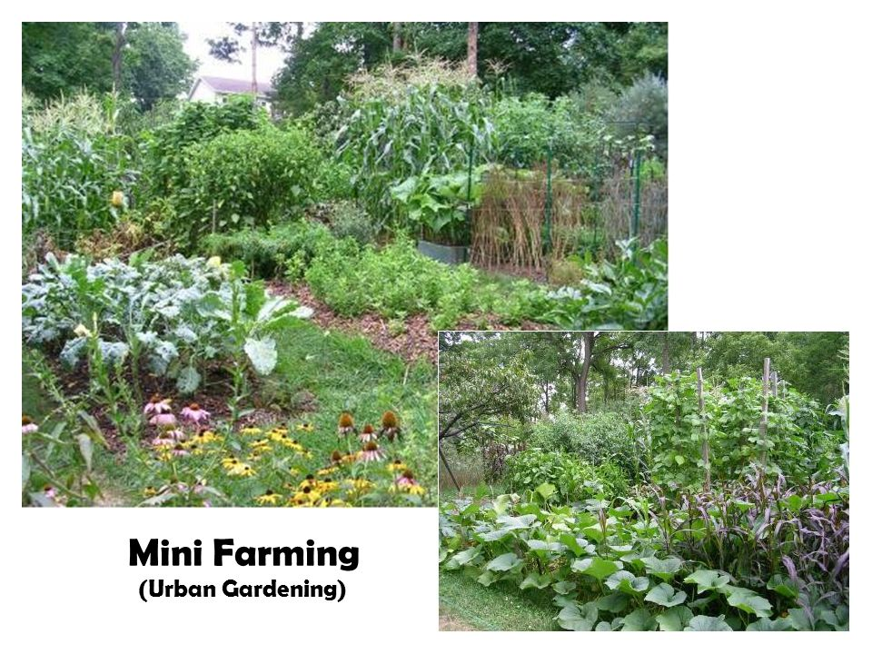 Mini Farming (Urban Gardening)
