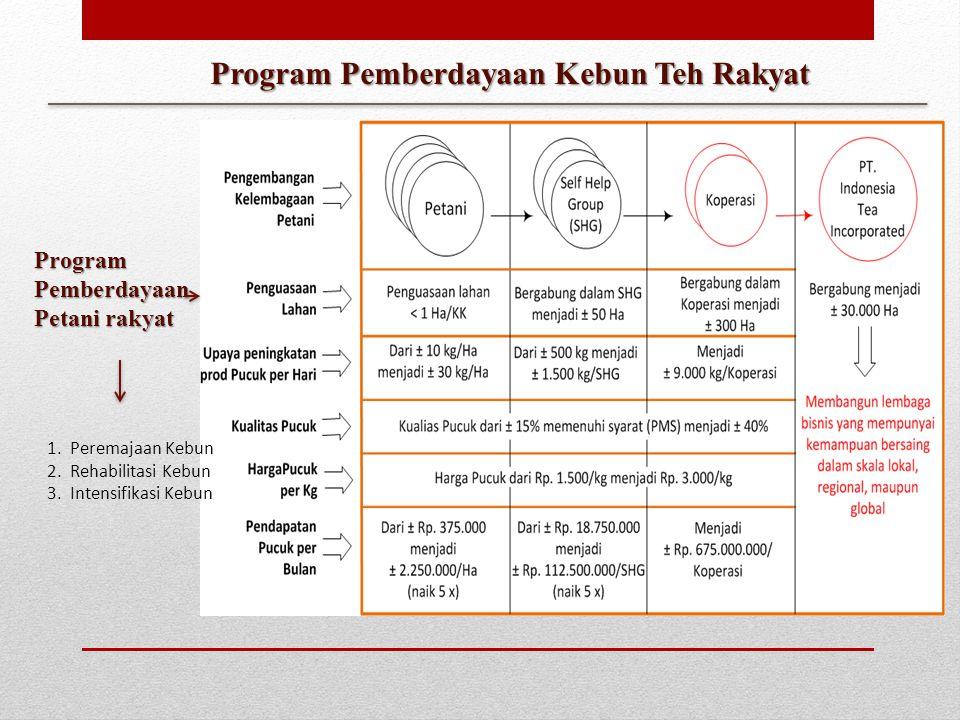 Program Pemberdayaan Kebun Teh Rakyat Program Pemberdayaan Petani rakyat 1.Peremajaan Kebun 2.Rehabilitasi Kebun 3.Intensifikasi Kebun