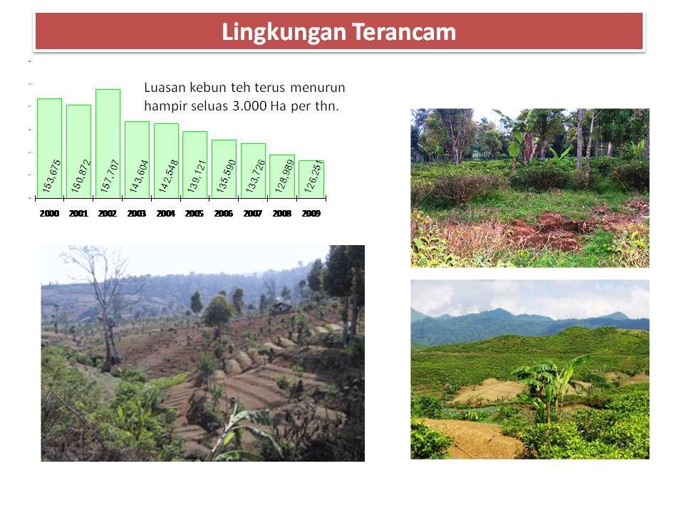 Identifikasi Permasalahan Pertehan Nasional  Kondisi tanaman 60% merupakan tanaman tua/rusak.