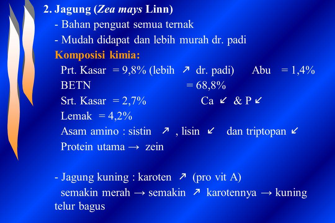 2.Jagung (Zea mays Linn) - Bahan penguat semua ternak - Mudah didapat dan lebih murah dr. padi Komposisi kimia: Prt. Kasar = 9,8% (lebih  dr. padi)Ab