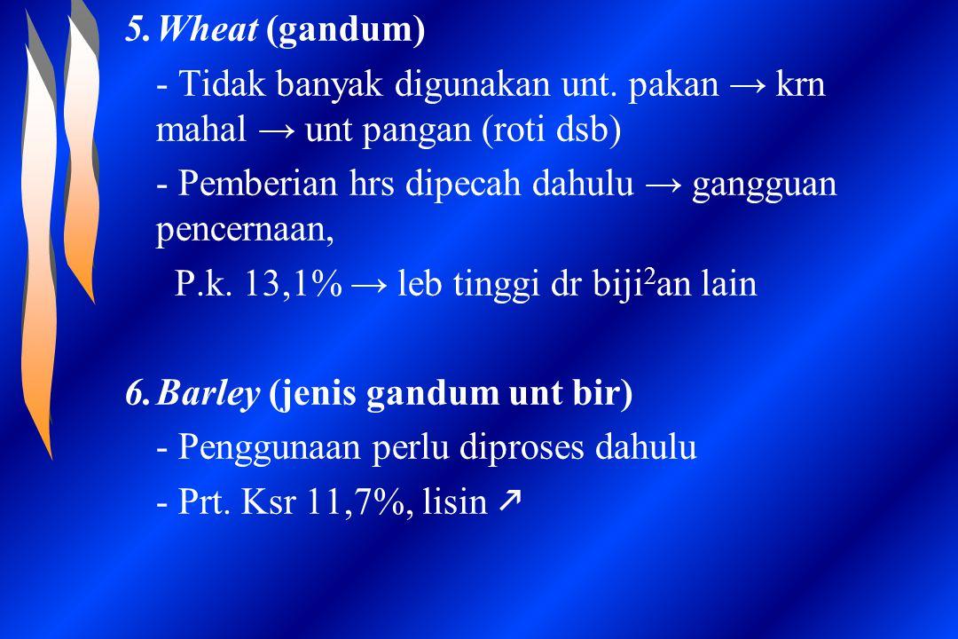 5.Wheat (gandum) - Tidak banyak digunakan unt. pakan → krn mahal → unt pangan (roti dsb) - Pemberian hrs dipecah dahulu → gangguan pencernaan, P.k. 13