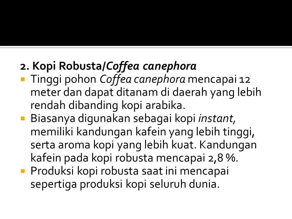 2. Kopi Robusta/Coffea canephora  Tinggi pohon Coffea canephora mencapai 12 meter dan dapat ditanam di daerah yang lebih rendah dibanding kopi arabik
