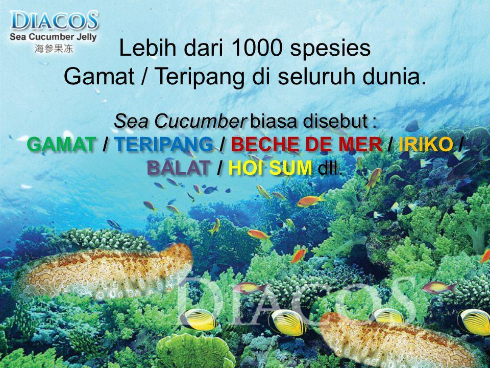 Lebih dari 1000 spesies Gamat / Teripang di seluruh dunia. Sea Cucumber biasa disebut : GAMAT / TERIPANG / BECHE DE MER / IRIKO / BALAT / HOI SUM dll.