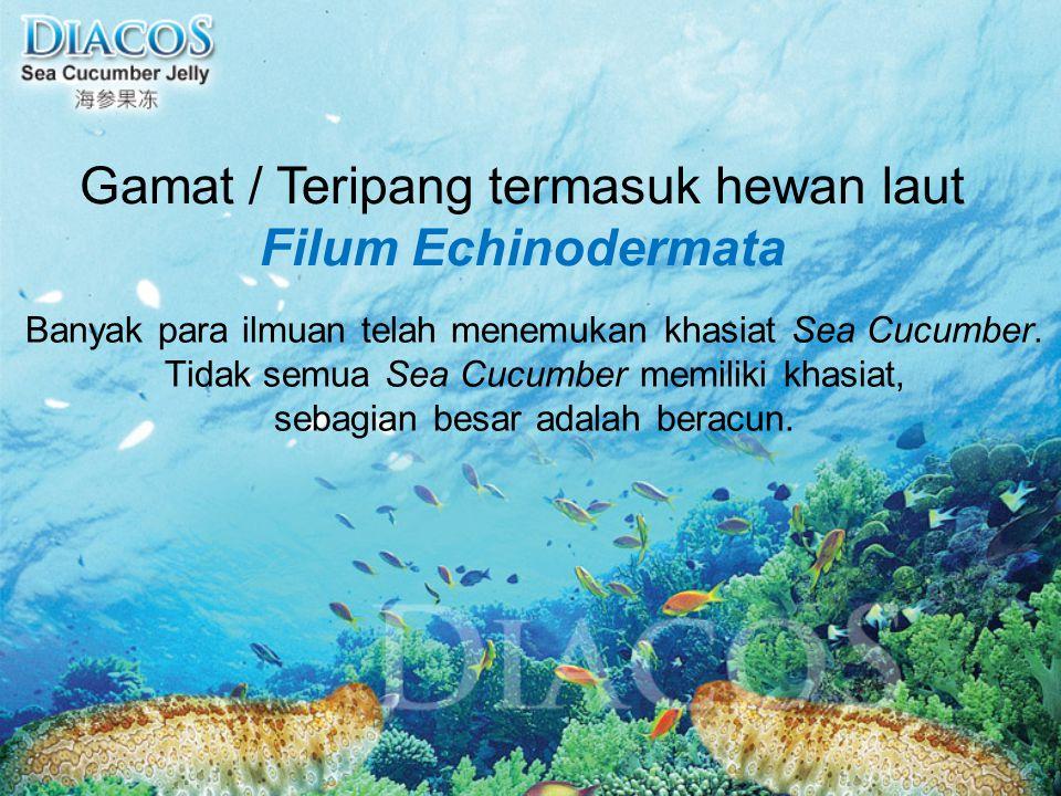 Gamat / Teripang termasuk hewan laut Filum Echinodermata Banyak para ilmuan telah menemukan khasiat Sea Cucumber. Tidak semua Sea Cucumber memiliki kh