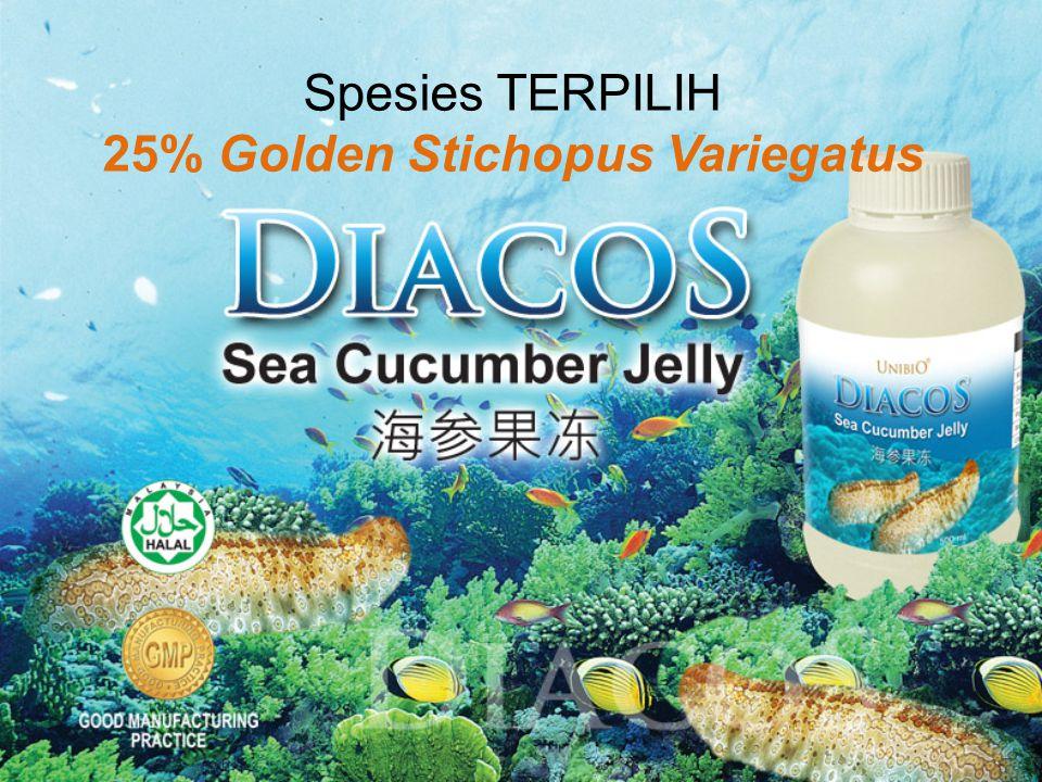 Spesies TERPILIH 25% Golden Stichopus Variegatus