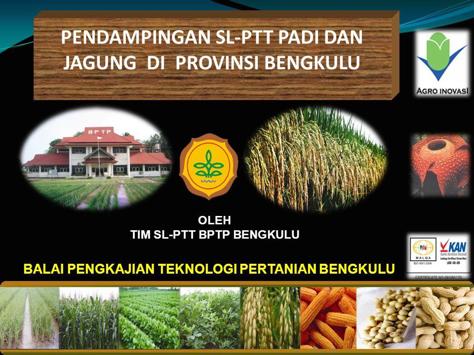 PENDAMPINGAN SL-PTT PADI DAN JAGUNG DI PROVINSI BENGKULU Balai pengkajian teknoloGi pertanian 2010 BALAI PENGKAJIAN TEKNOLOGI PERTANIAN BENGKULU OLEH TIM SL-PTT BPTP BENGKULU