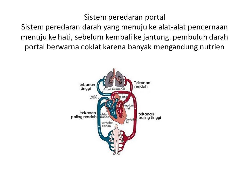 Sistem peredaran portal Sistem peredaran darah yang menuju ke alat-alat pencernaan menuju ke hati, sebelum kembali ke jantung. pembuluh darah portal b