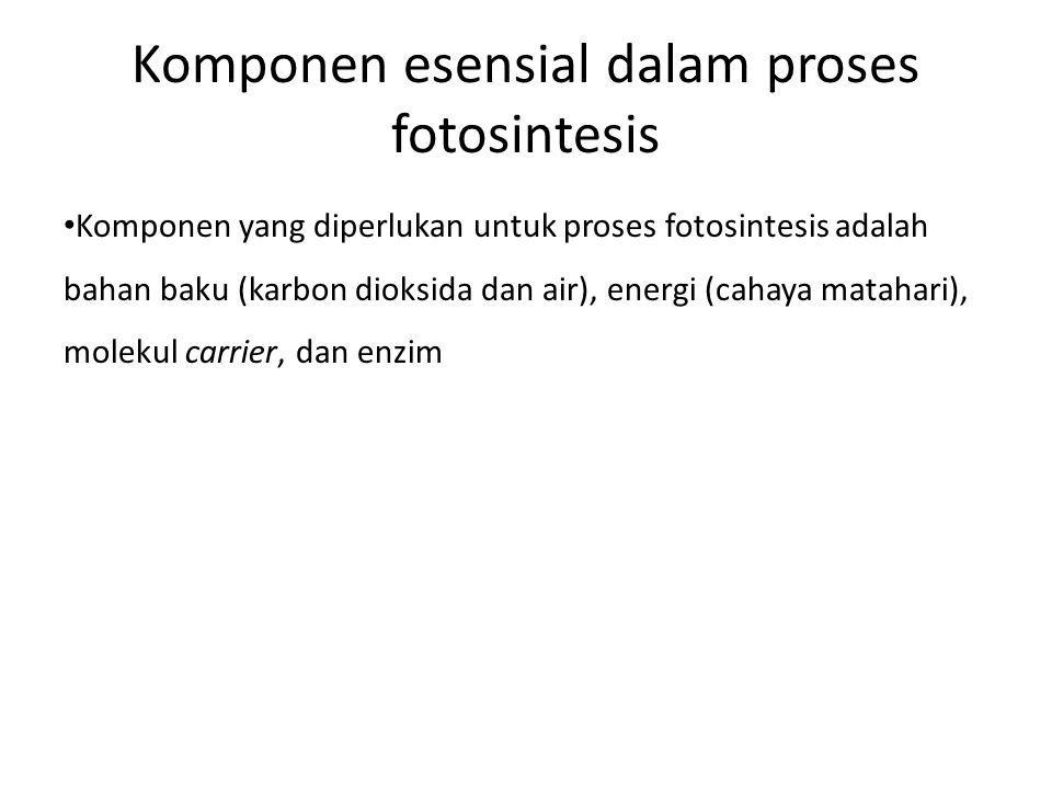 Komponen esensial dalam proses fotosintesis Komponen yang diperlukan untuk proses fotosintesis adalah bahan baku (karbon dioksida dan air), energi (ca