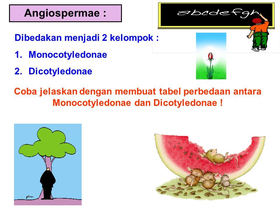 Angiospermae : Dibedakan menjadi 2 kelompok : 1.Monocotyledonae 2.Dicotyledonae Coba jelaskan dengan membuat tabel perbedaan antara Monocotyledonae da