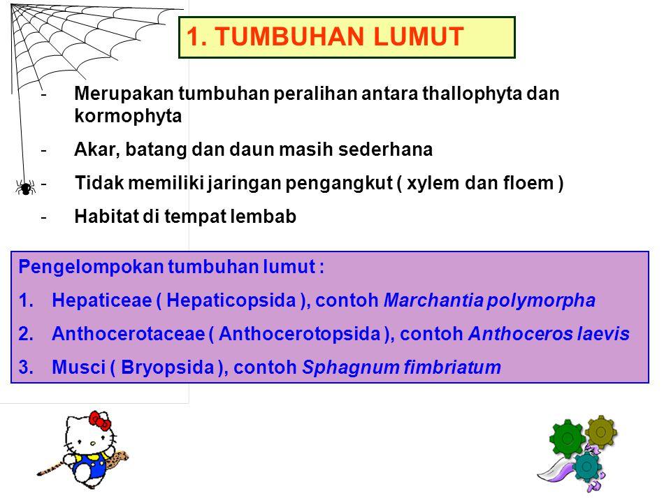 Reproduksi Lumut : -Mengalami metagenesis atau pergiliran keturunan antara fase sporofit dan fase gametofit -Fase gametofit adalah tumbuhan lumut, menghasilkan gamet, lebih dominan dan hidupnya lebih lama -Tumbuhan lumut sel-selnya haploid, sebab tumbuh langsung dari spora -Fase sporofit adalah sporogonium, menghasilkan spora, hidupnya tidak lama -Sporogonium sel-selnya diploid, sebab tumbuh dari zygot