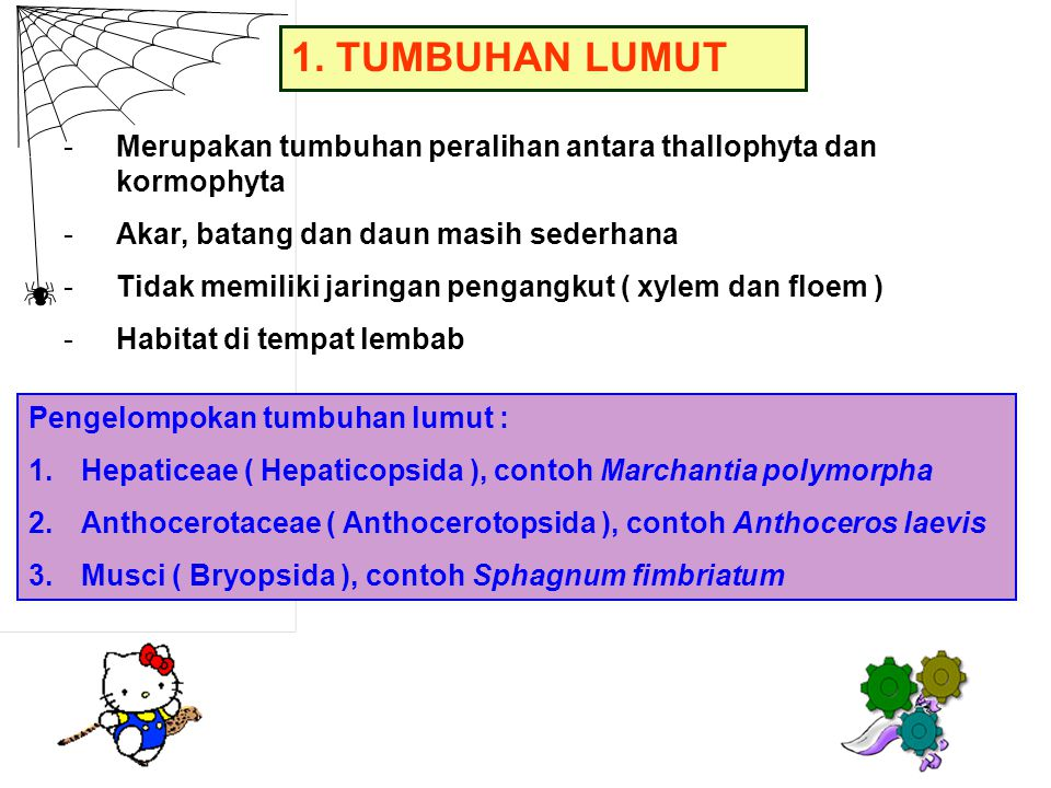 1. TUMBUHAN LUMUT -Merupakan tumbuhan peralihan antara thallophyta dan kormophyta -Akar, batang dan daun masih sederhana -Tidak memiliki jaringan peng