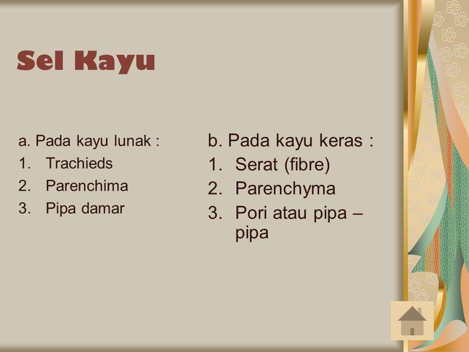 Sel Kayu a. Pada kayu lunak : 1.Trachieds 2.Parenchima 3.Pipa damar b. Pada kayu keras : 1.Serat (fibre) 2.Parenchyma 3.Pori atau pipa – pipa