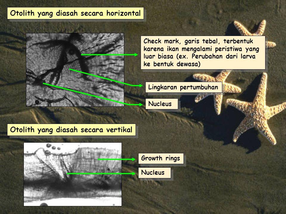 Otolith yang diasah secara horizontal Nucleus Check mark, garis tebal, terbentuk karena ikan mengalami peristiwa yang luar biasa (ex.