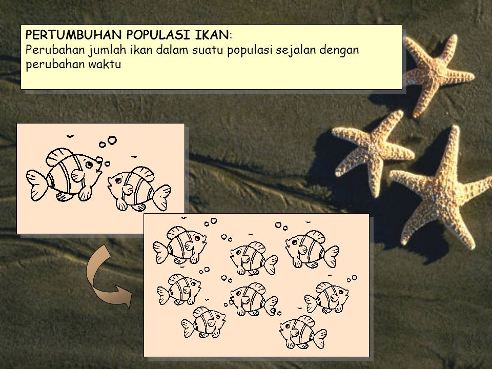 Otolith ikan yang berukuran relatif besar Growth rings 1 st check mark 2 nd check mark 1 st check mark 2 nd check mark Growth rings