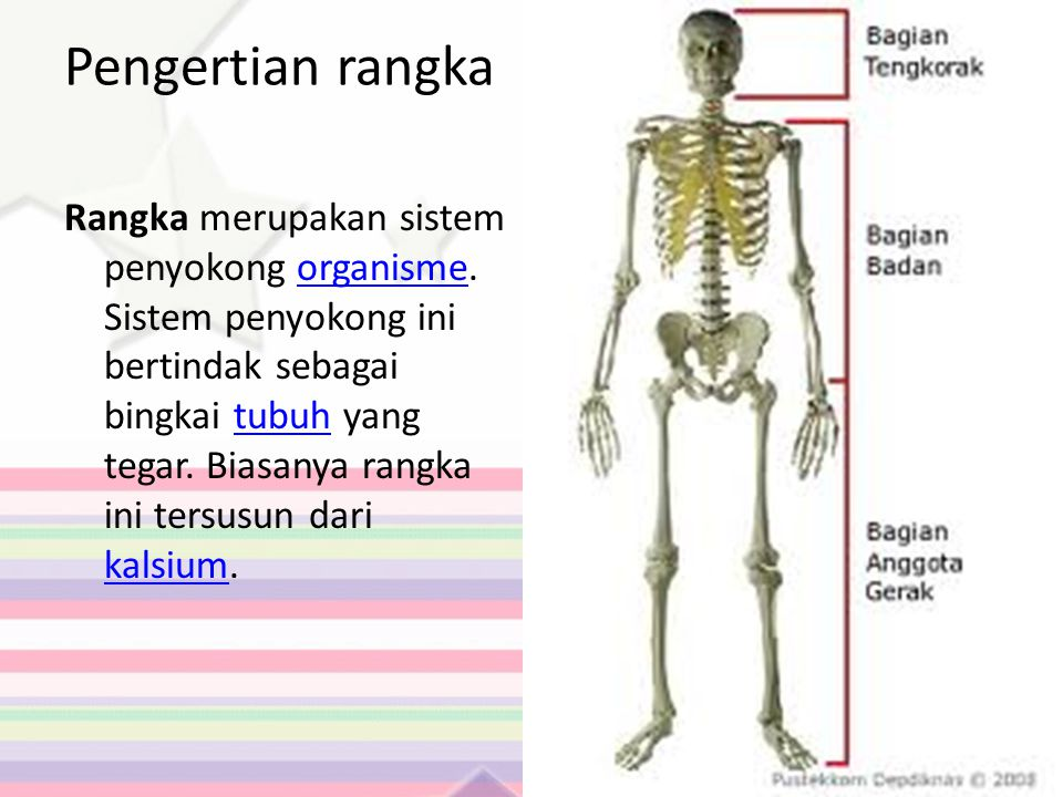 Pengertian rangka Rangka merupakan sistem penyokong organisme. Sistem penyokong ini bertindak sebagai bingkai tubuh yang tegar. Biasanya rangka ini te