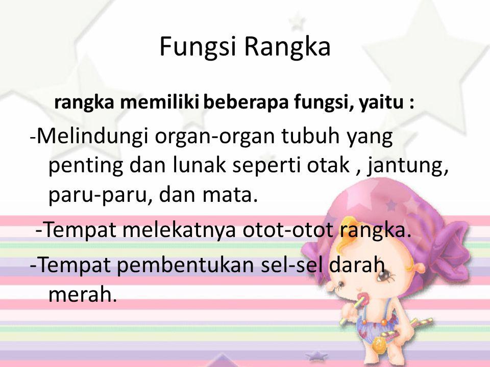Fungsi Rangka rangka memiliki beberapa fungsi, yaitu : - Melindungi organ-organ tubuh yang penting dan lunak seperti otak, jantung, paru-paru, dan mata.