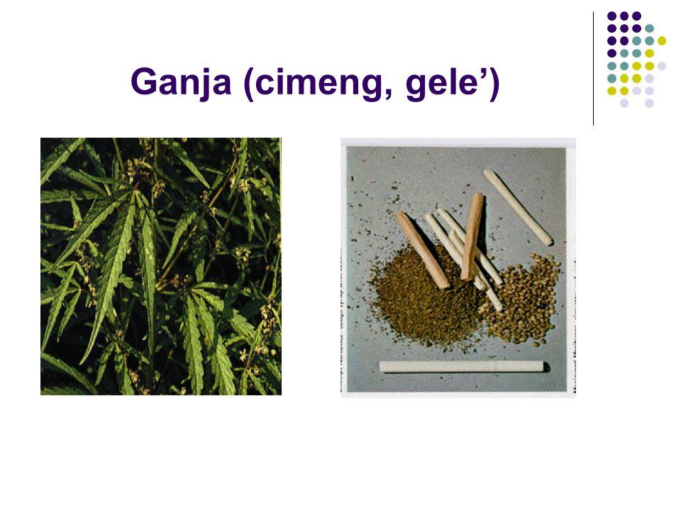 Ganja (cimeng, gele')