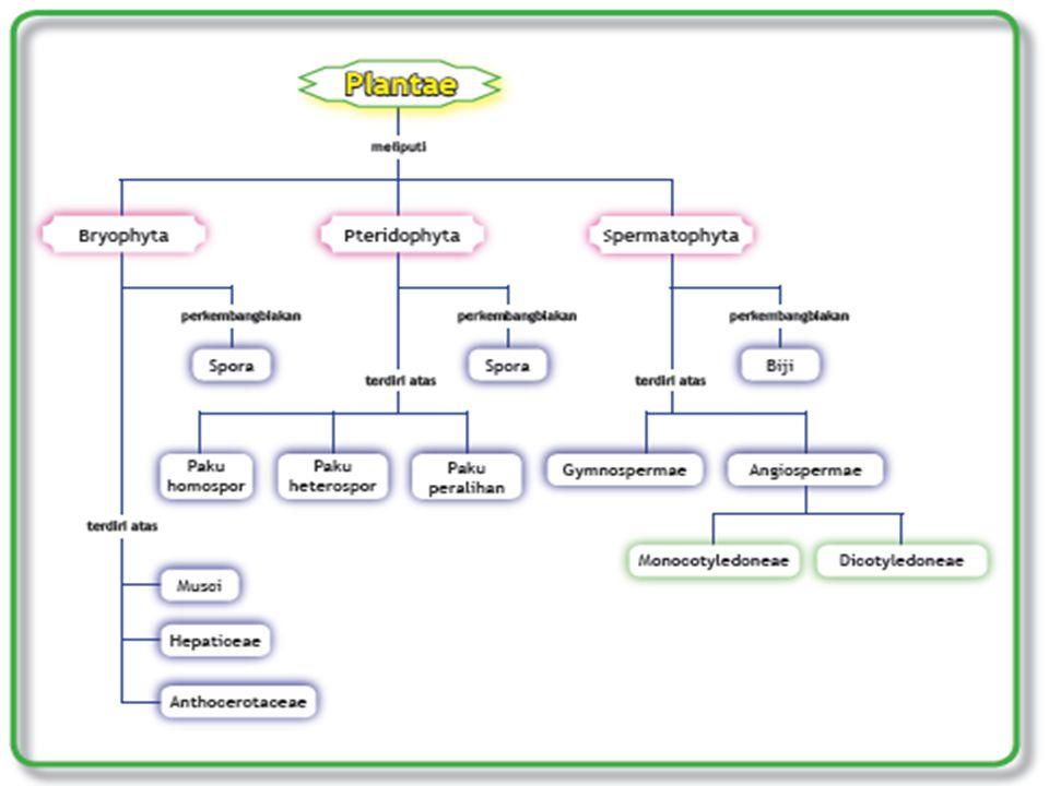 CIRI-CIRI SPERMATOPHYTA Reproduksi generatif menghasilkan biji, di dalamnya terdapat lembaga/embrio.