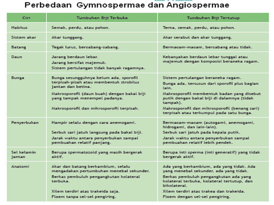 Berdasarkan letak bakal biji, dibedakan menjadi dua : a.Tumbuhan berbiji terbuka (Gymnospermae) contoh : pinus, pakis haji, melinjo dll b.Tumbuhan ber