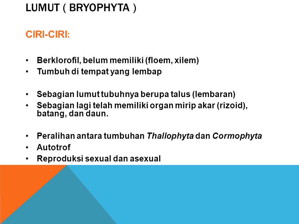 PENGELOMPOKAN TUMBUHAN Berdasarkan keberadaan pembuluh angkut a. Atracheophyta ( tumbuhan tak berpembuluh angkut ), contoh : Lumut ( Bryophyta ) b. Tr