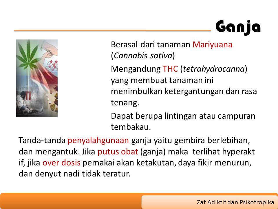 Ganja Berasal dari tanaman Mariyuana (Cannabis sativa) Mengandung THC (tetrahydrocanna) yang membuat tanaman ini menimbulkan ketergantungan dan rasa t