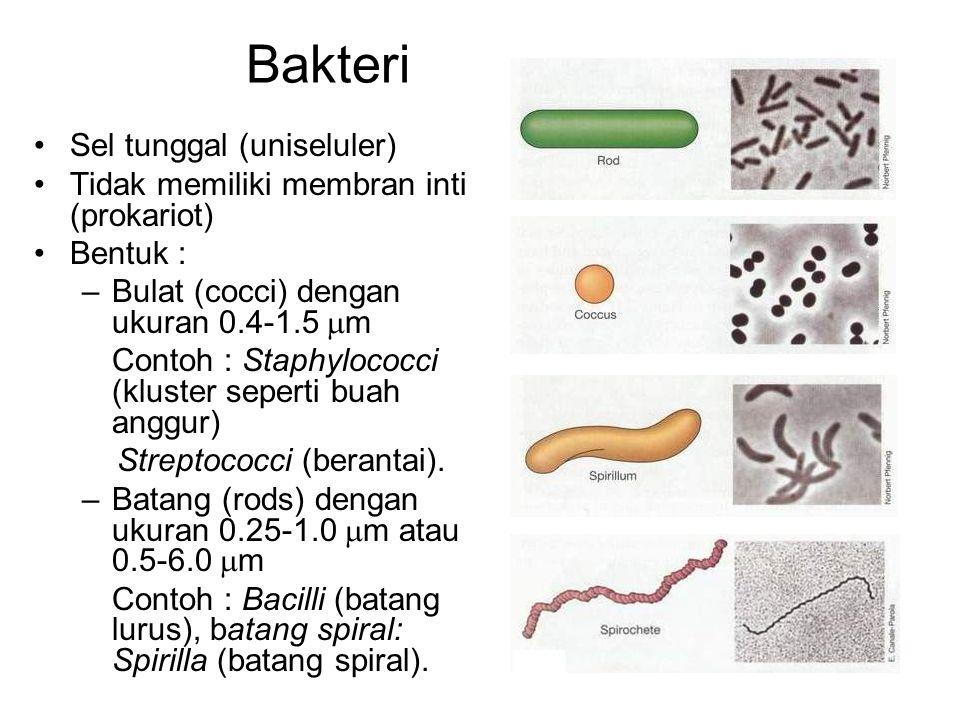 Bakteri Sel tunggal (uniseluler) Tidak memiliki membran inti (prokariot) Bentuk : –Bulat (cocci) dengan ukuran 0.4-1.5  m Contoh : Staphylococci (kluster seperti buah anggur) Streptococci (berantai).
